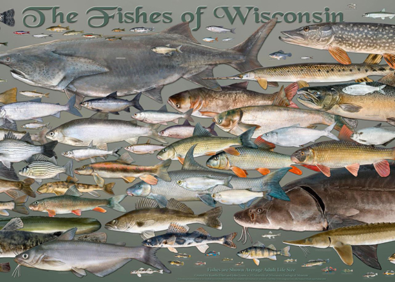 Wisconsin's Fishes