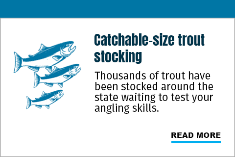 Catchable-size trout stocking. Thousands of trout have been stocked around the state awaiting to test your angling skills.