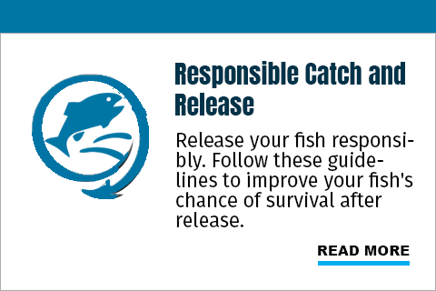Release your fish responsibly. Follow these guidelines to improve your fish's chance of survival after release.
