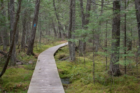 A wooden boardwalk curving into a forest.