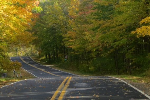 A paved road winding through a forest in the fall.