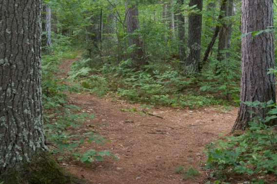A trail splitting in two deep in a forest.