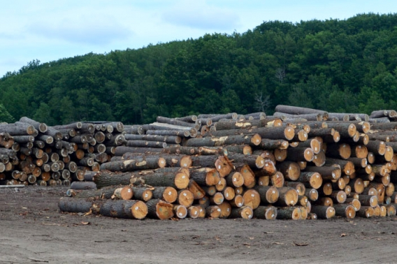 Several piles of newly cut lumber.