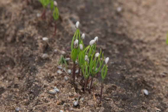 Tree seedlings sprouting from the ground