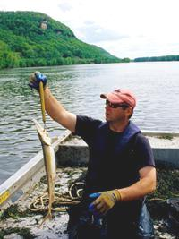 Shovelnose sturgeon assessment