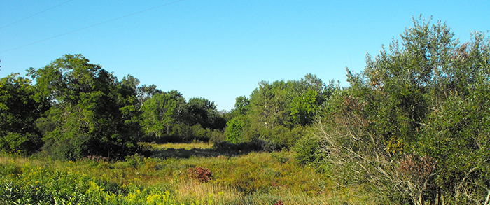 Morgan Marsh Wildlife Area