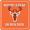 Report a dead or sick deer